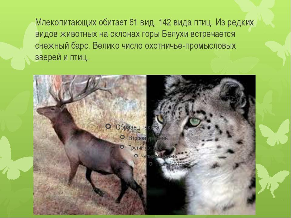 Млекопитающих обитает 61 вид, 142 вида птиц. Из редких видов животных на скло...