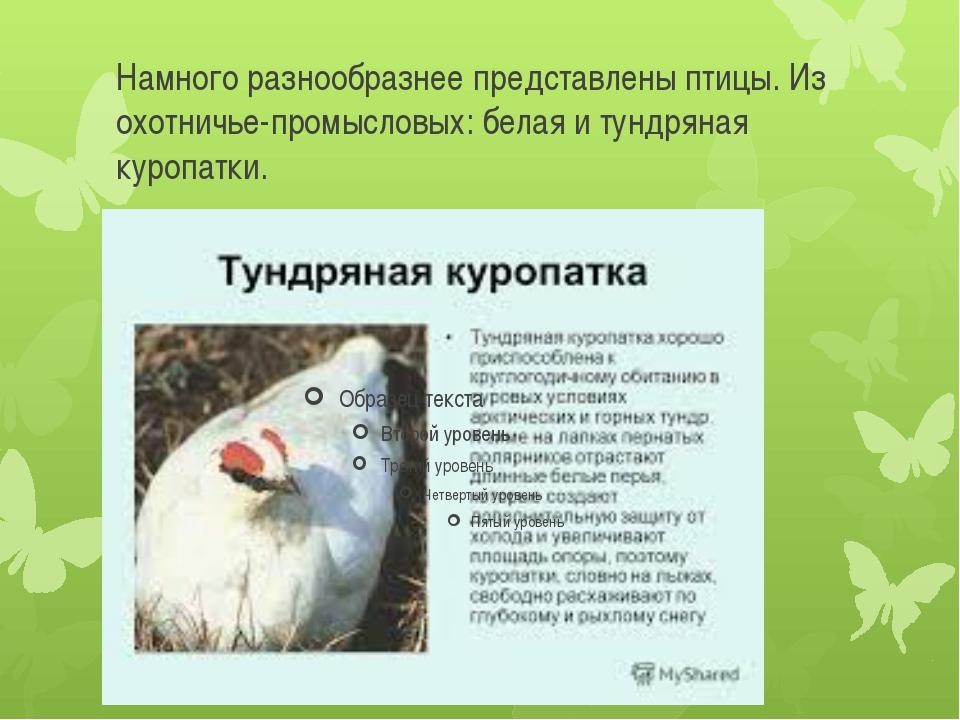 Намного разнообразнее представлены птицы. Из охотничье-промысловых: белая и т...
