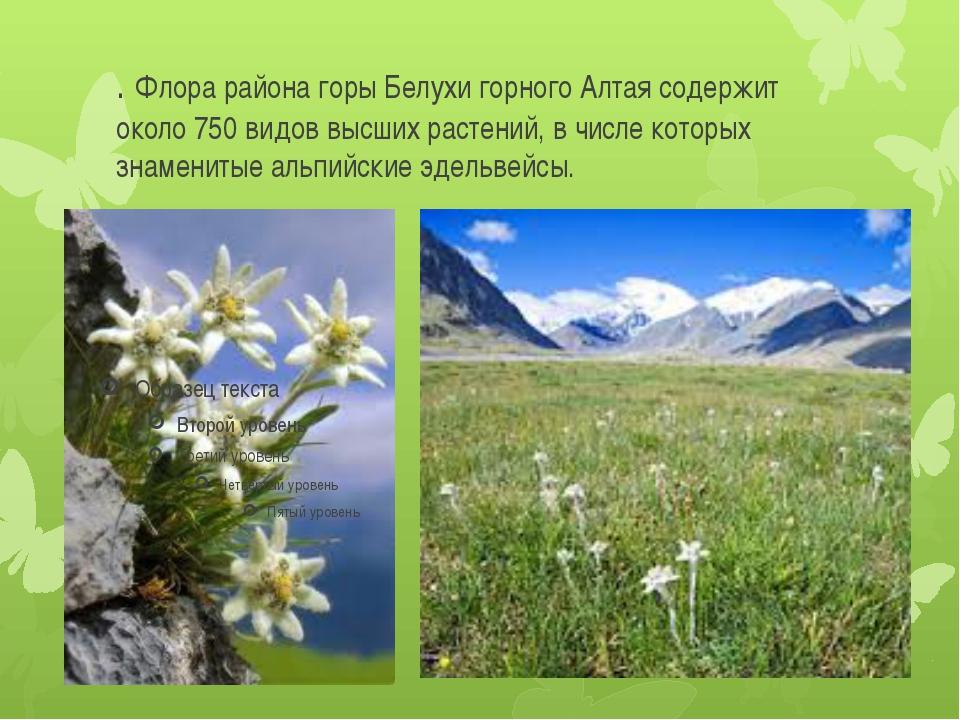 . Флора района горы Белухи горного Алтая содержит около 750 видов высших раст...