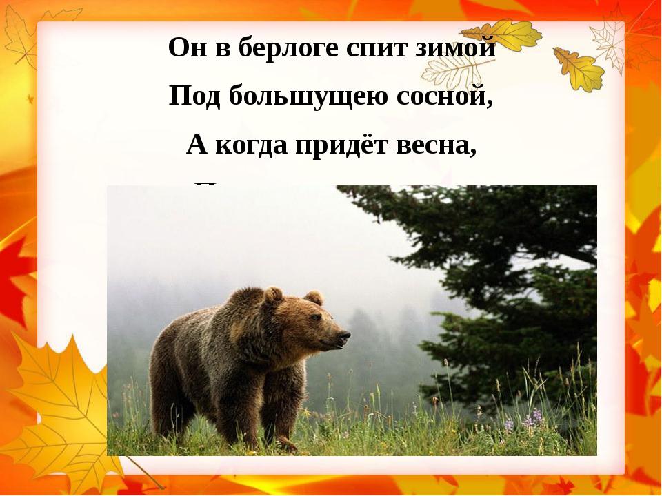 Он в берлоге спит зимой Под большущею сосной, А когда придёт весна, Просыпает...
