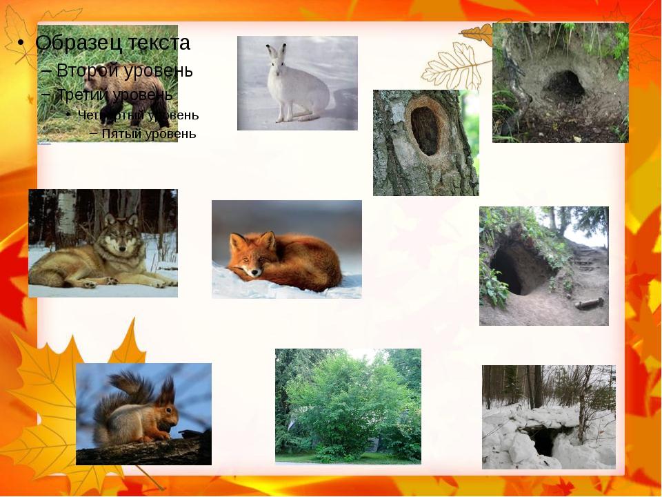 имеет картинки дикие животные и их жилища картинки тем, как