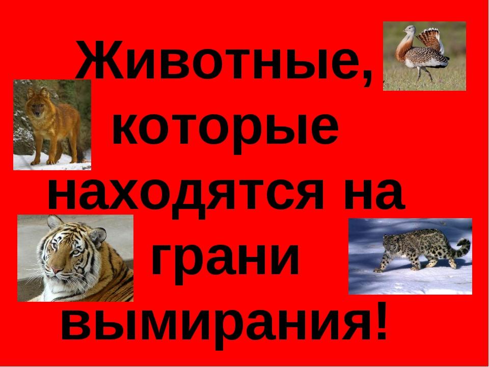 Животные, которые находятся на грани вымирания!