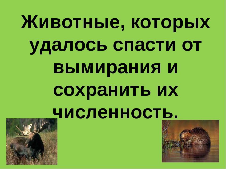 Животные, которых удалось спасти от вымирания и сохранить их численность.