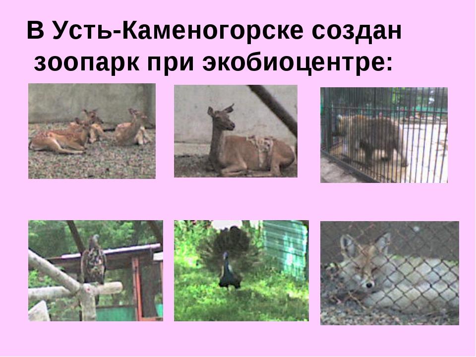 В Усть-Каменогорске создан зоопарк при экобиоцентре: