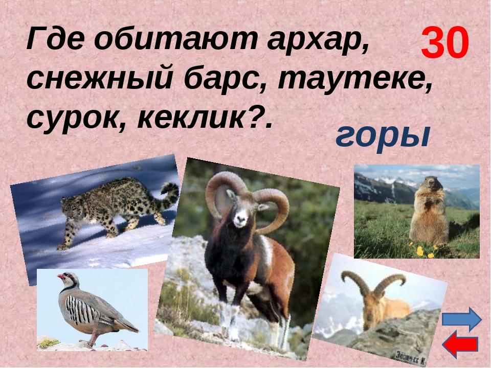 Где обитают архар, снежный барс, таутеке, сурок, кеклик?. горы 30