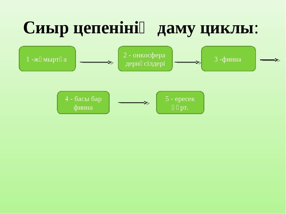 Сиыр цепенінің даму циклы:  1 -жұмыртқа 2 - онкосфера дернәсілдері 3 -финна...