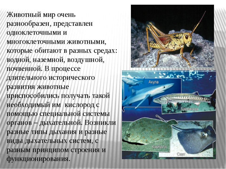 Животный мир очень разнообразен, представлен одноклеточными и многоклеточными...