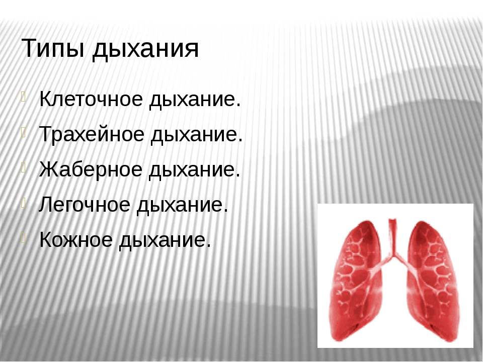 Типы дыхания Клеточное дыхание. Трахейное дыхание. Жаберное дыхание. Легочное...