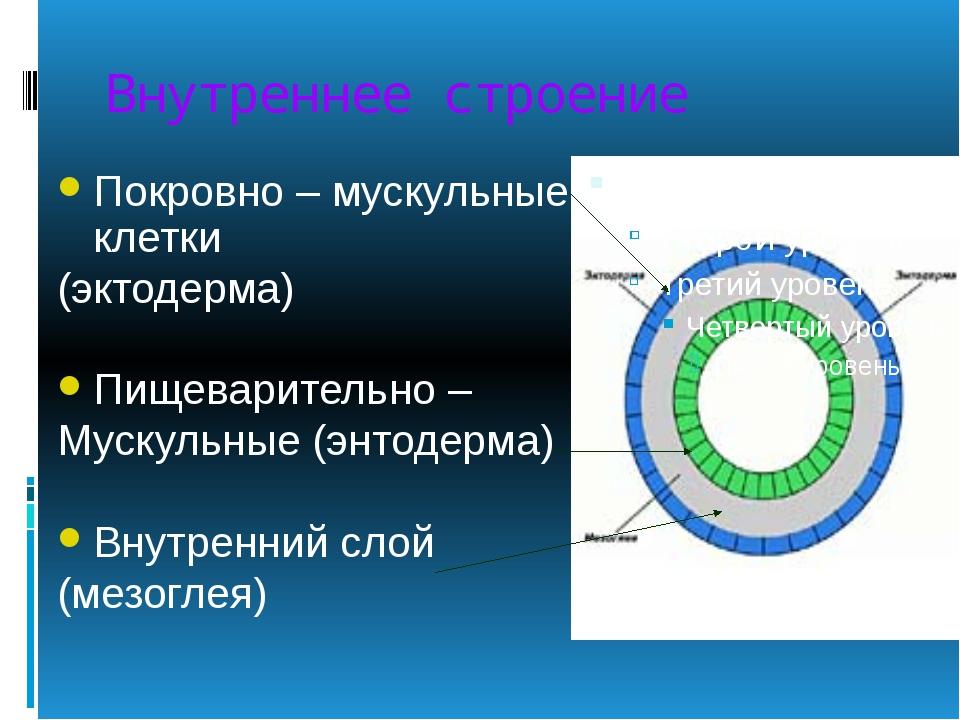 Внутреннее строение Покровно – мускульные клетки (эктодерма) Пищеварительно –...