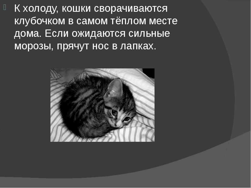 К холоду, кошки сворачиваются клубочком в самом тёплом месте дома. Если ожида...