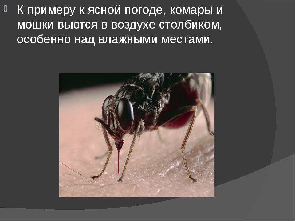 К примеру к ясной погоде, комары и мошки вьются в воздухе столбиком, особенно...