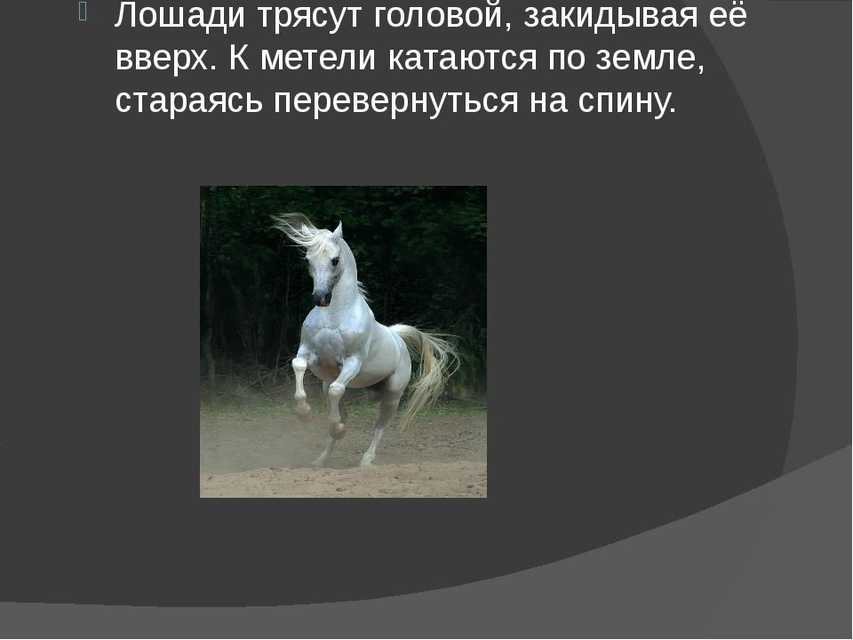 Лошади трясут головой, закидывая её вверх. К метели катаются по земле, старая...