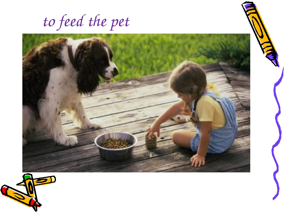 to feed the pet