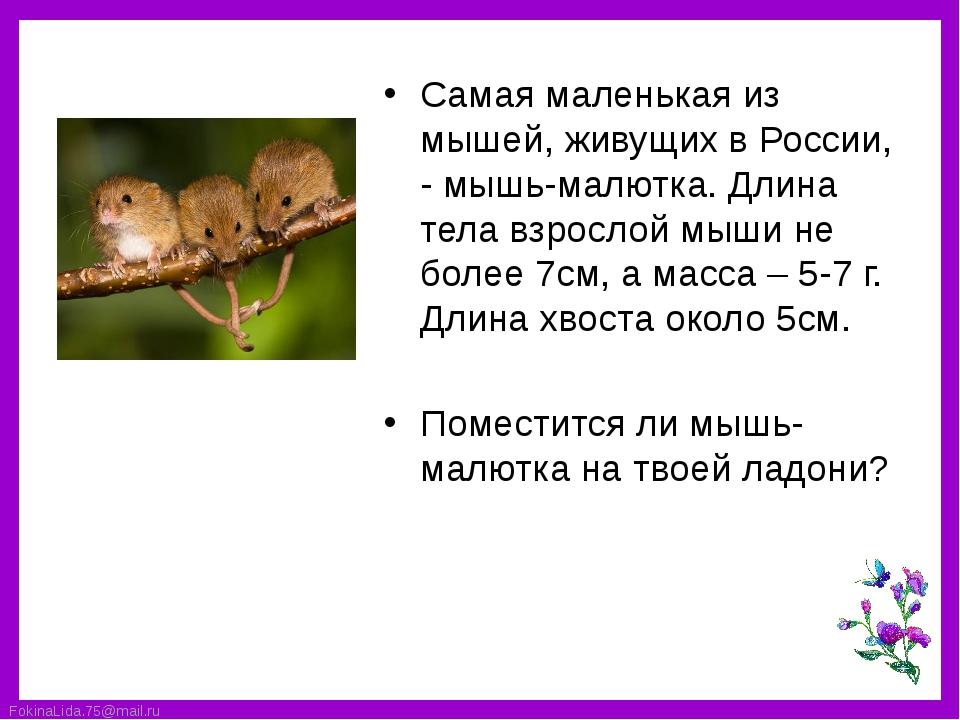 Самая маленькая из мышей, живущих в России, - мышь-малютка. Длина тела взросл...