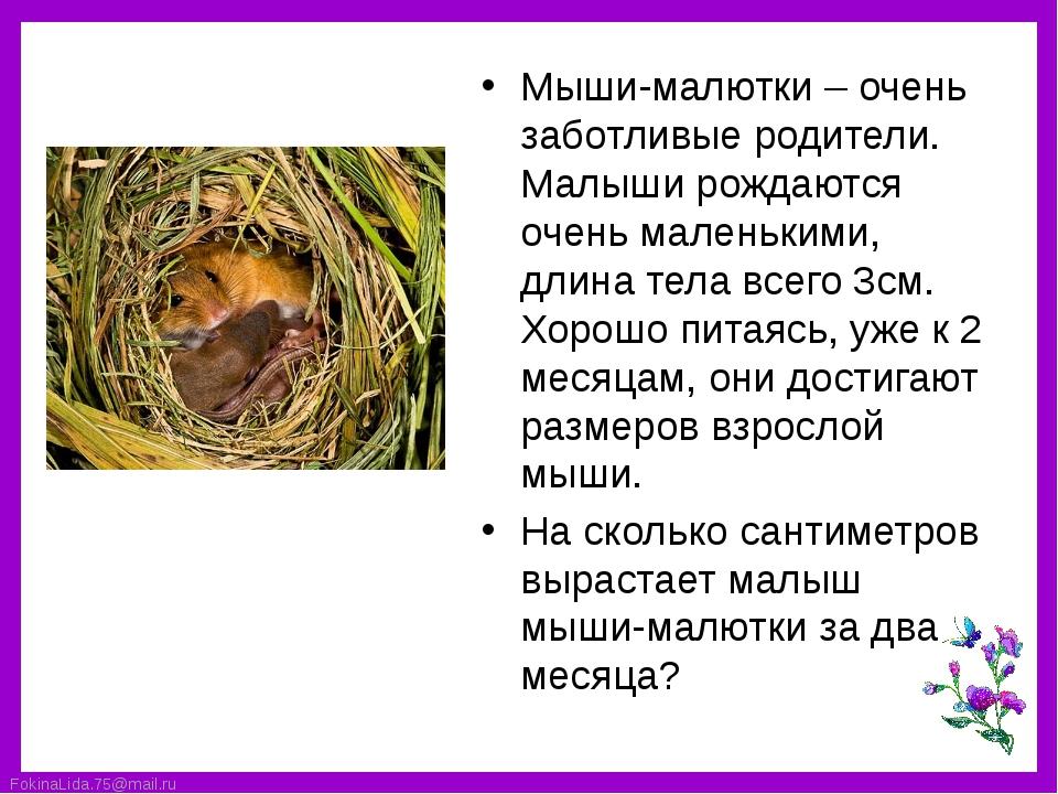Мыши-малютки – очень заботливые родители. Малыши рождаются очень маленькими,...