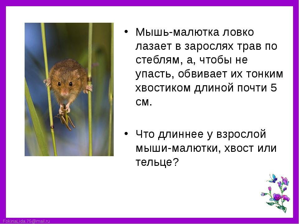 Мышь-малютка ловко лазает в зарослях трав по стеблям, а, чтобы не упасть, обв...