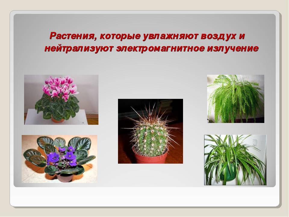 Растения, которые увлажняют воздух и нейтрализуют электромагнитное излучение