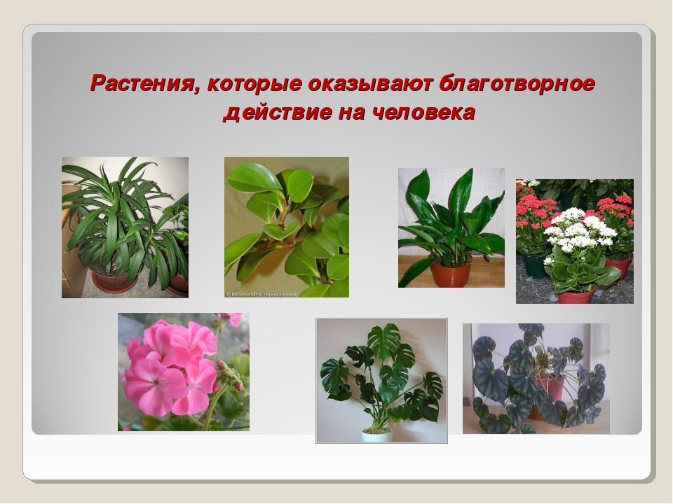 Растения, которые оказывают благотворное действие на человека