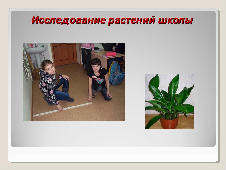 Исследование растений школы