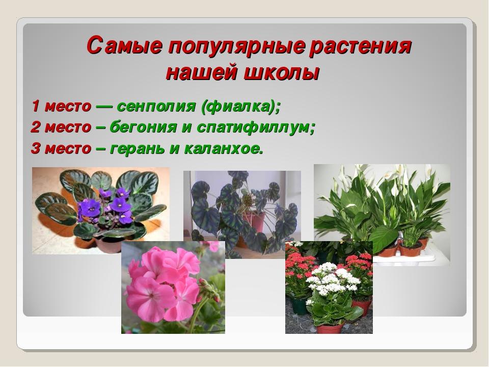Самые популярные растения нашей школы 1 место — сенполия (фиалка); 2 место –...