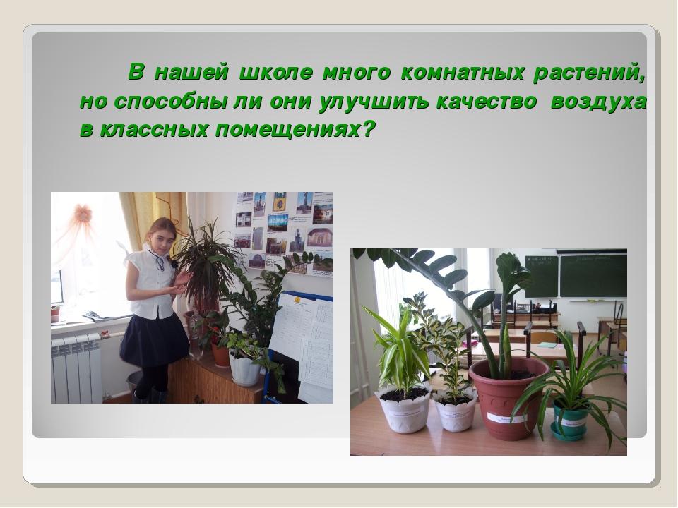 В нашей школе много комнатных растений, но способны ли они улучшить качеств...
