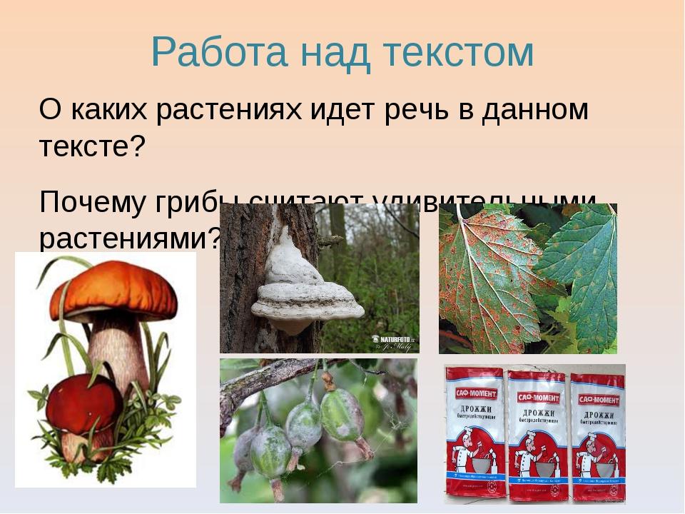 Работа над текстом О каких растениях идет речь в данном тексте? Почему грибы...