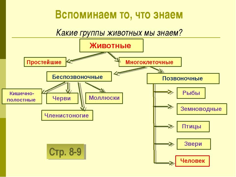 Животные Многоклеточные Простейшие Моллюски Кишечно-полостные Черви Членистон...