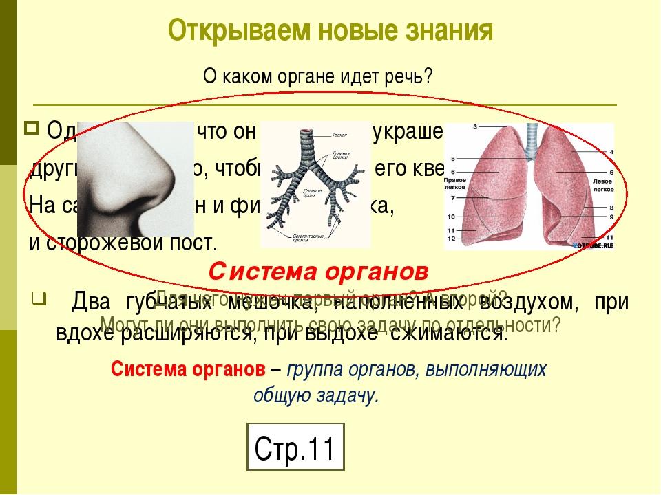 Два губчатых мешочка, наполненных воздухом, при вдохе расширяются, при выдох...