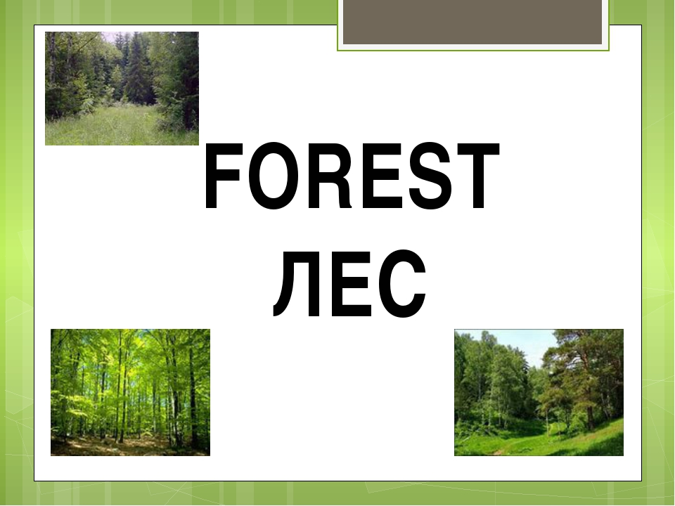 FOREST ЛЕС