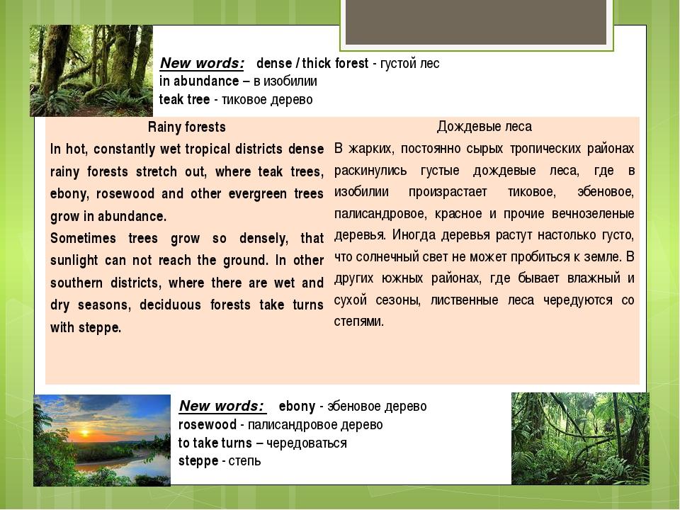 New words: dense / thick forest - густой лес in abundance – в изобилии teak t...