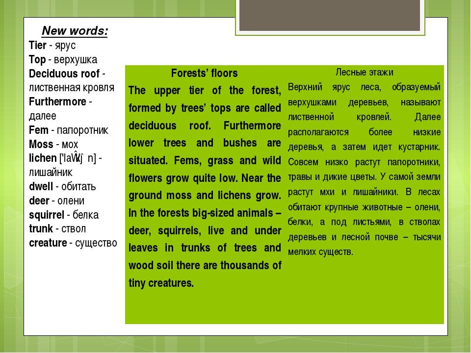 New words: Tier - ярус Top - верхушка Deciduous roof - лиственная кровля Furt...