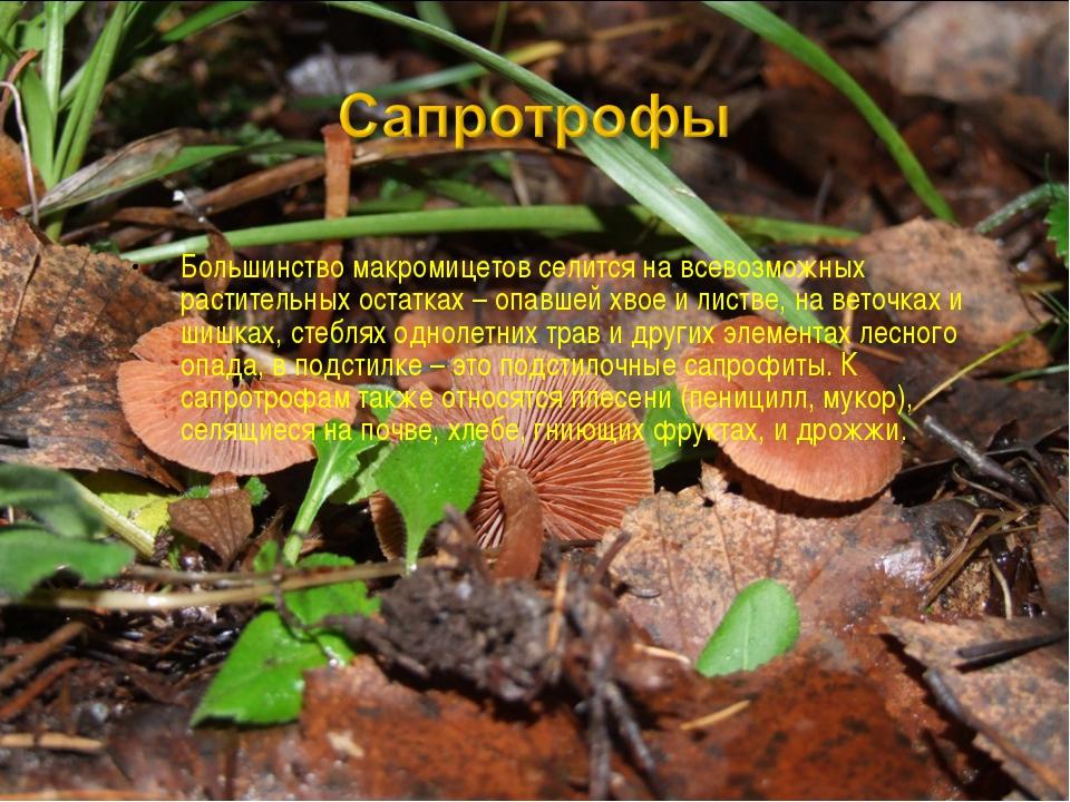 Большинство макромицетов селится на всевозможных растительных остатках – опав...