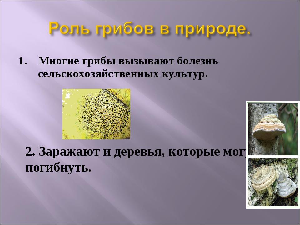1. Многие грибы вызывают болезнь сельскохозяйственных культур. 2. Заражают и...