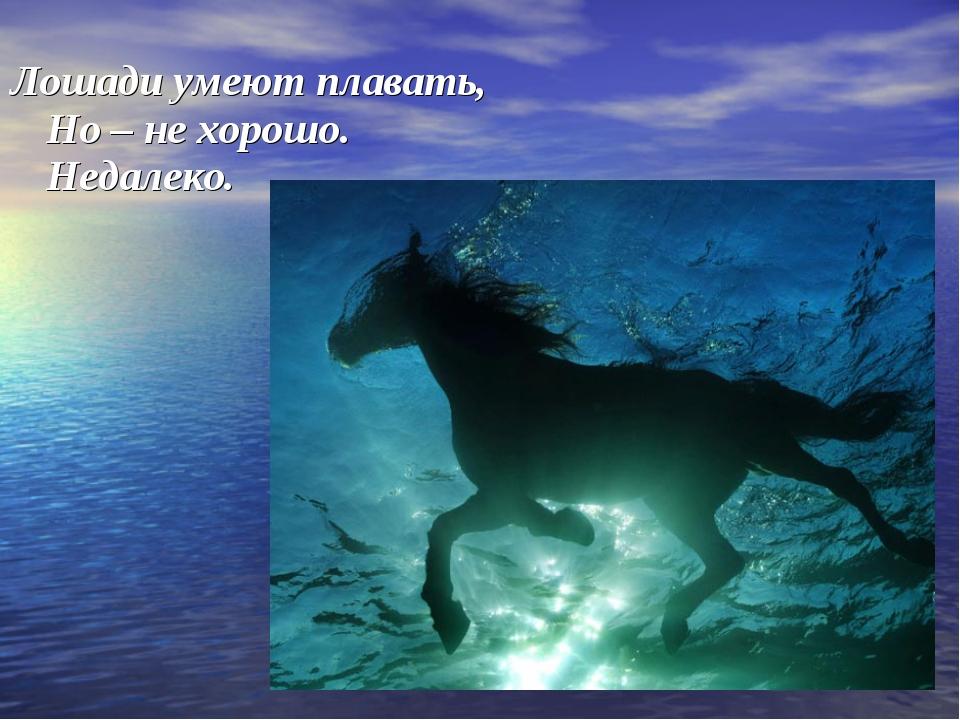 Лошади умеют плавать, Но – не хорошо. Недалеко.
