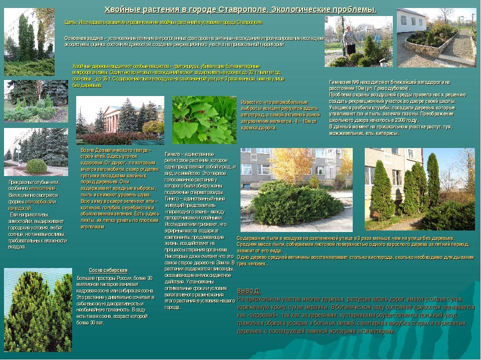 Хвойные растения в городе Ставрополе. Экологические проблемы. Цель: Исследова...