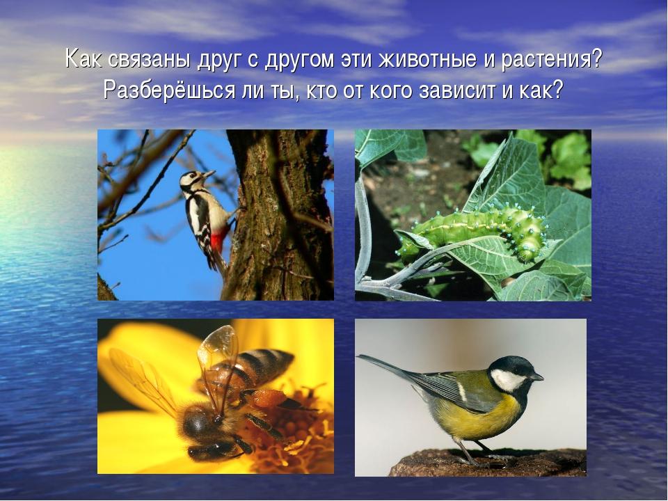 Как связаны друг с другом эти животные и растения? Разберёшься ли ты, кто от...
