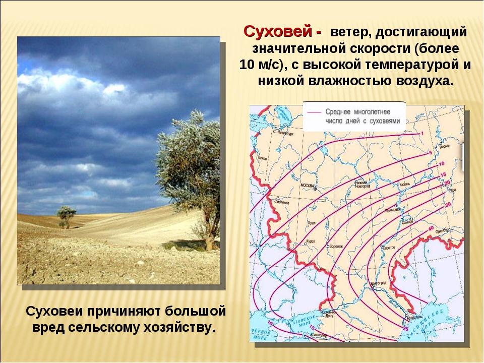 Суховеи причиняют большой вред сельскому хозяйству. Суховей - ветер, достигаю...