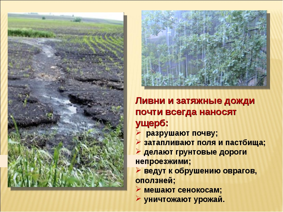 Ливни и затяжные дожди почти всегда наносят ущерб: разрушают почву; затаплива...