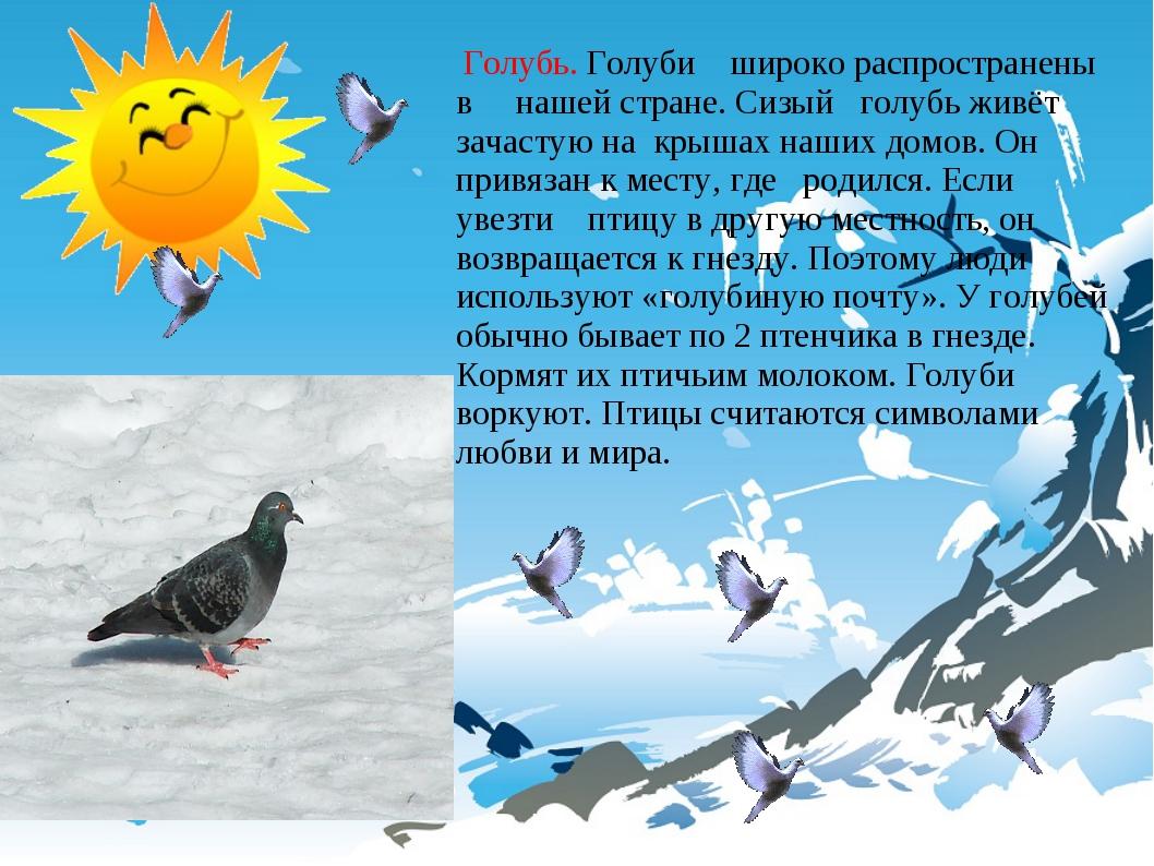 Голубь. Голуби широко распространены в нашей стране. Сизый голубь живёт зача...