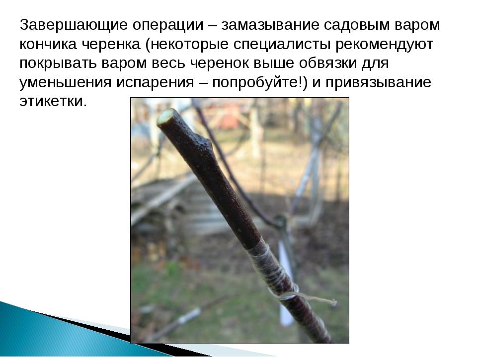 Завершающие операции – замазывание садовым варом кончика черенка (некоторые с...