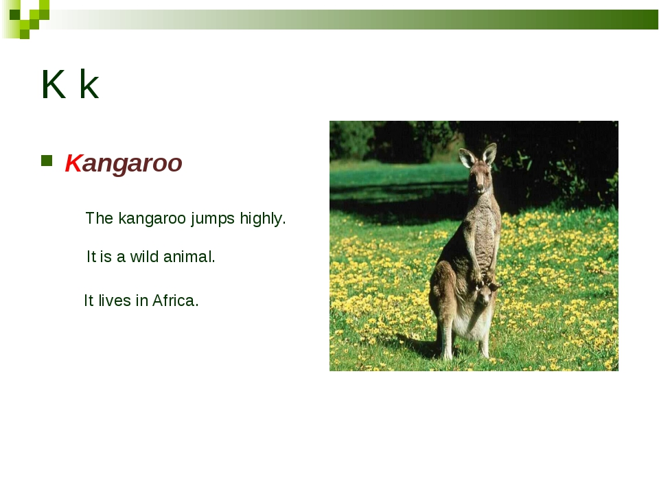 K k Kangaroo The kangaroo jumps highly. It is a wild animal. It lives in Afri