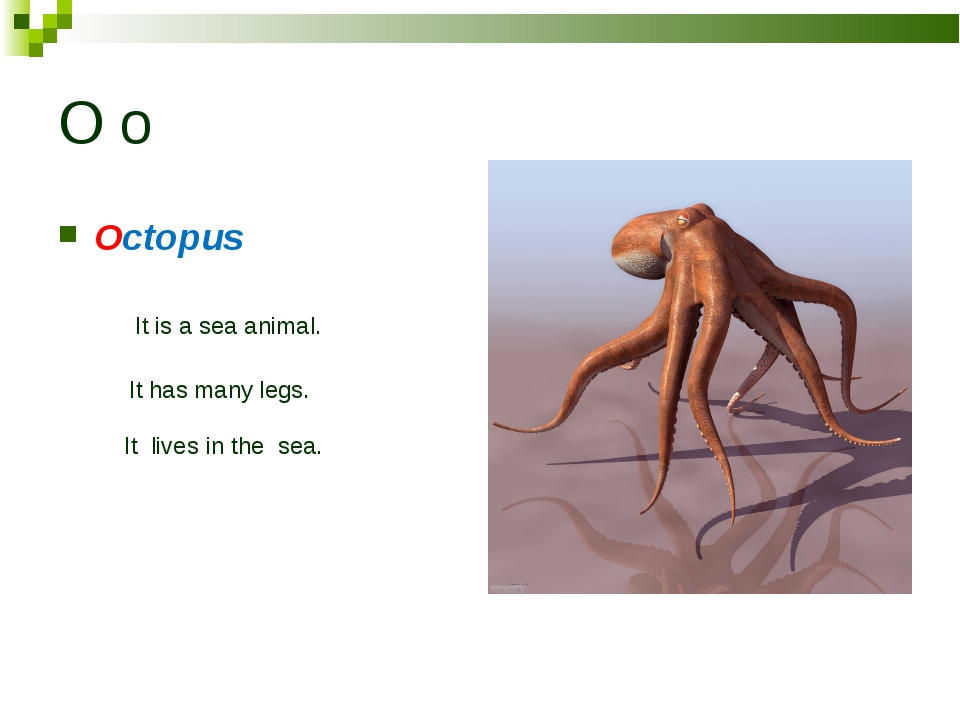O o Octopus It is a sea animal. It has many legs. It lives in the sea.