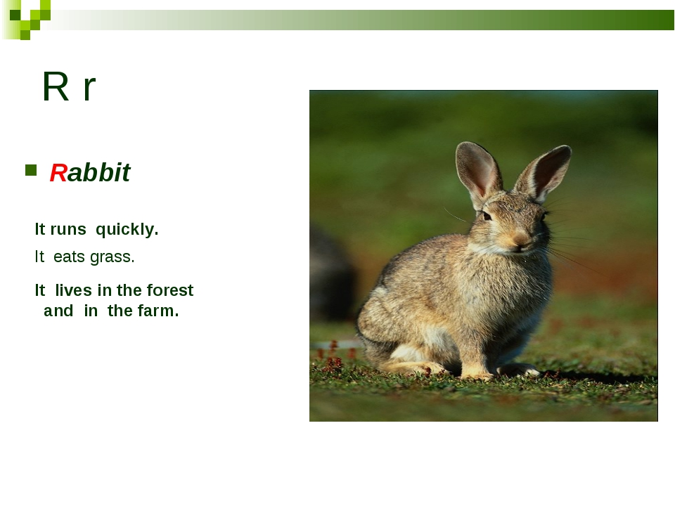 R r Rabbit It runs quickly. It eats grass. It lives in the forest and in the