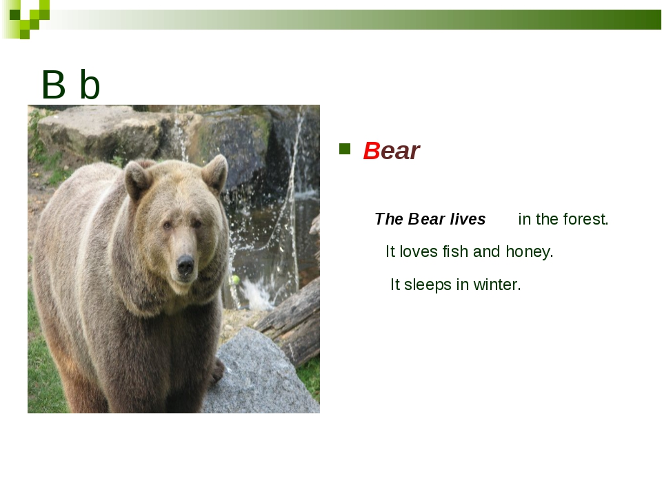 B b Bear The Bear lives in the forest. It loves fish аnd honey. It sleeps in