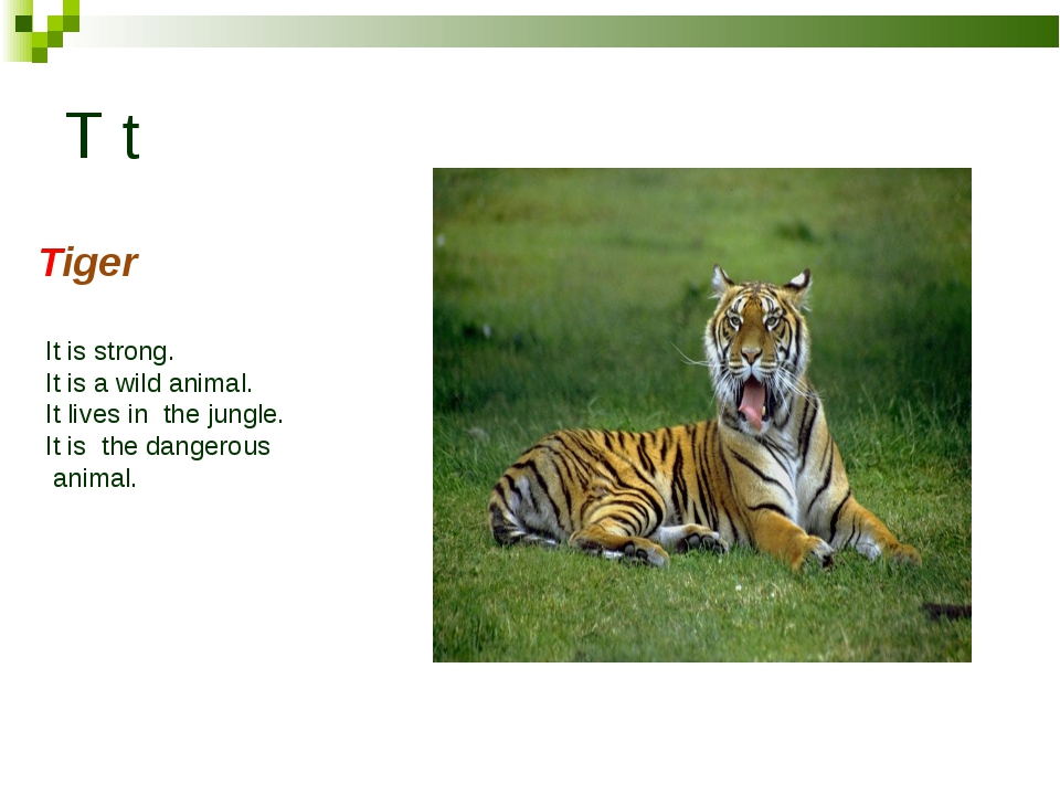 T t Tiger It is strong. It is a wild animal. It lives in the jungle. It is th