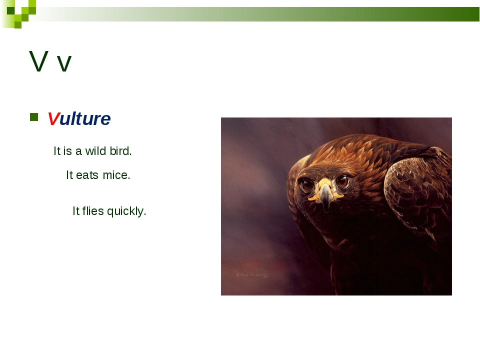 V v Vulture It is a wild bird. It eats mice. It flies quickly.