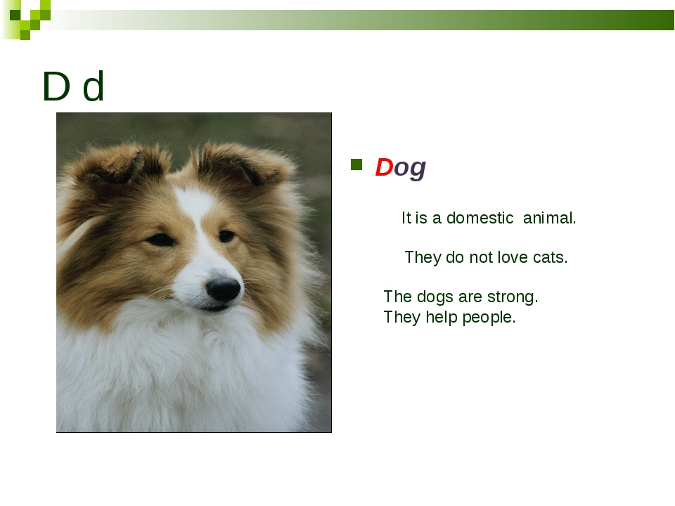 D d Dog is digging Dog It is a domestic animal. They do not love cats. The do...