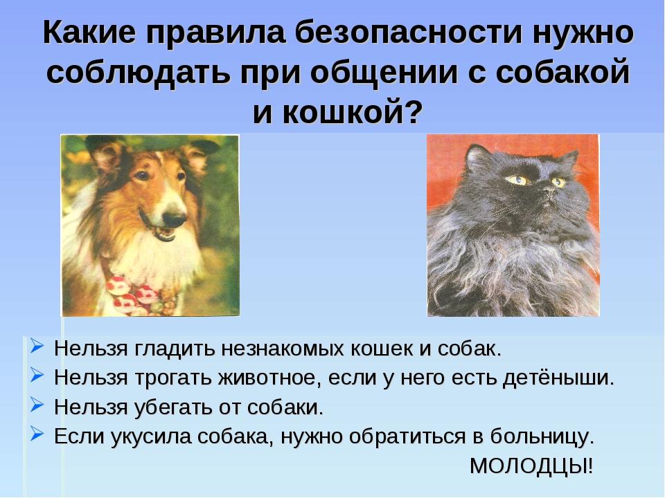 Какие правила безопасности нужно соблюдать при общении с собакой и кошкой? Не...