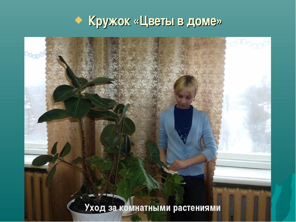 Кружок «Цветы в доме» Уход за комнатными растениями