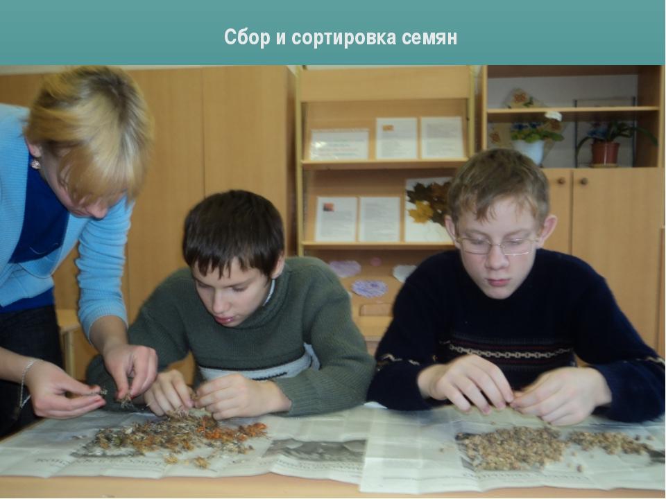 Сбор и сортировка семян
